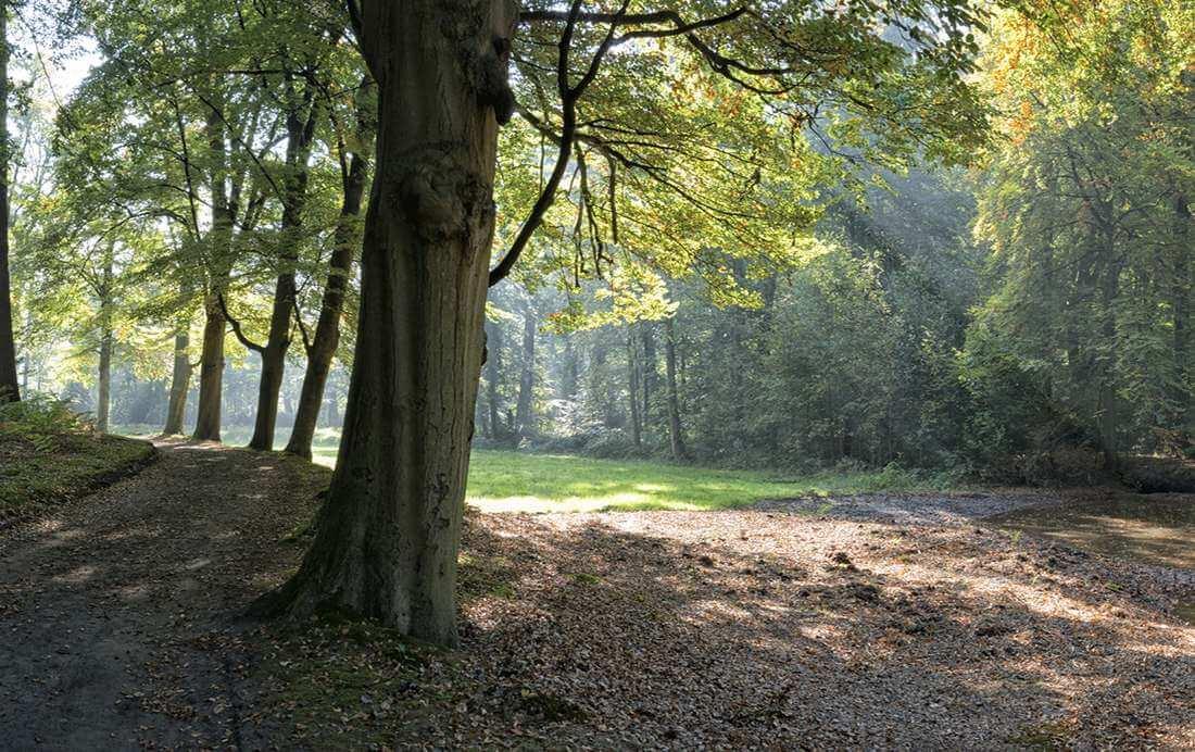 Fietsroute van de week | Door de Veluwse bossen