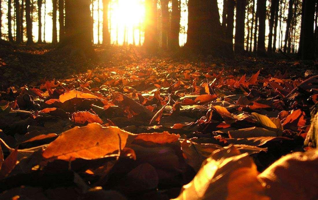 Fietsroute van de week (12) | Langs Beukenbomen