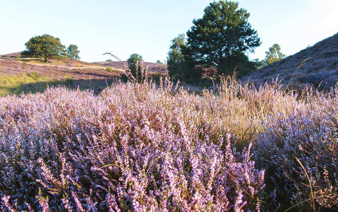 Fietsroute van de week (3) | Brunssummerheide
